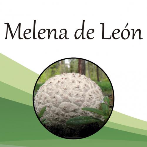 Melena-de-León